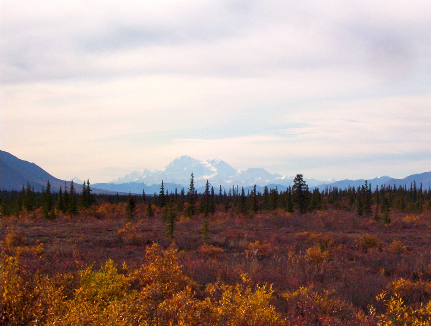 Denali National Park offers a wide array of gorgeous natural colors (Wikimedia Commons)