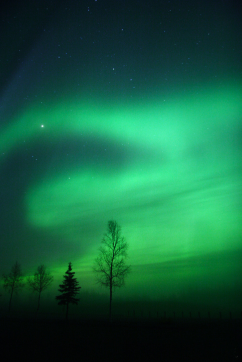 Green Glowing Sky of the Aurora Borealis with stars above and trees below.