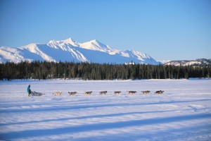 Dog Sled team moving across the Alaska landscape from Princess Lodges