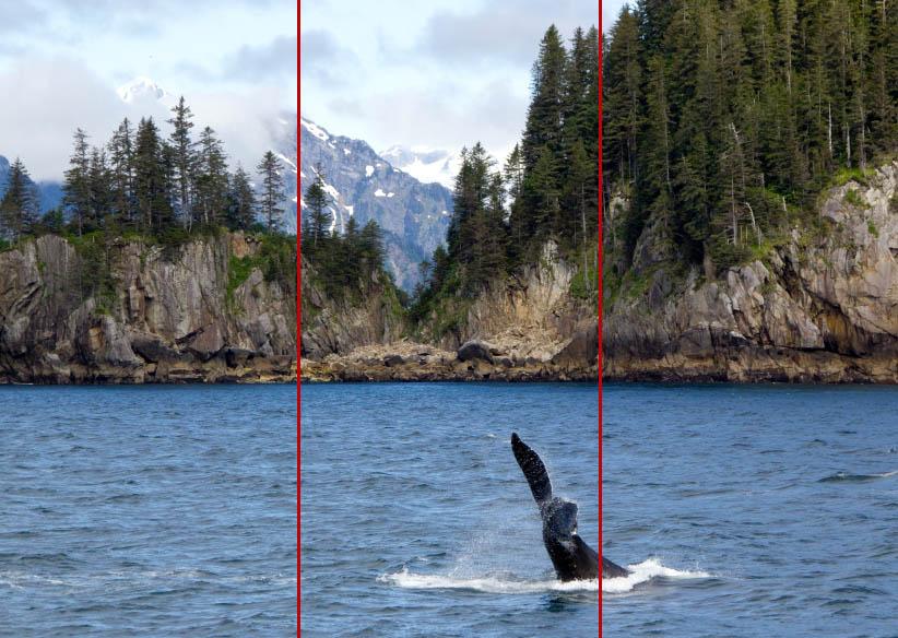 orca tail alaska rule of thirdsorca tail alaska rule of thirds