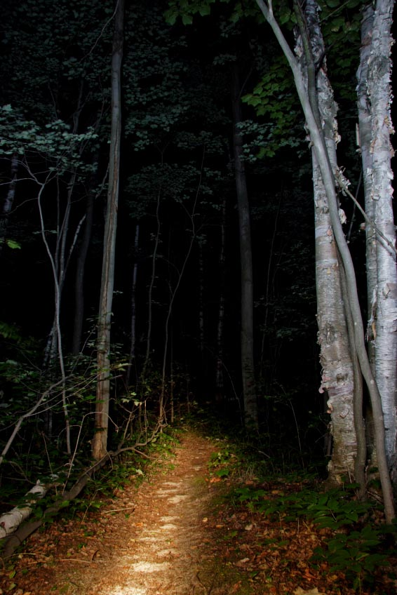 trail at night lit by flashlight