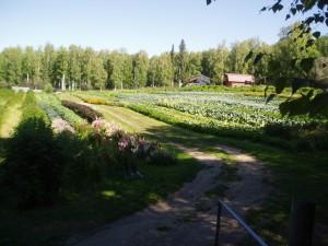 Fairbanks Alaska Farm, Basically Basil