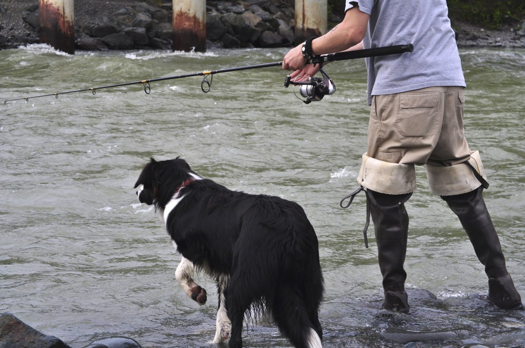 fisherman holding reel and salmon fishing in waders with a black and white dog to his left and both standing in an Alaska river.
