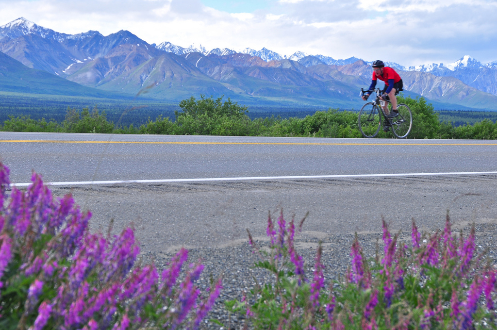 man riding bicycle with fireweed in foreground, Princess Alaska Lodges