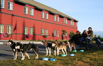 Dog Sled Demonstration & Ride