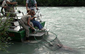 Salmon Fishing by Jet Boat