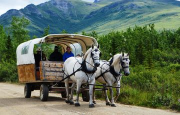 Covered Wagon Adventure with Backcountry Dining
