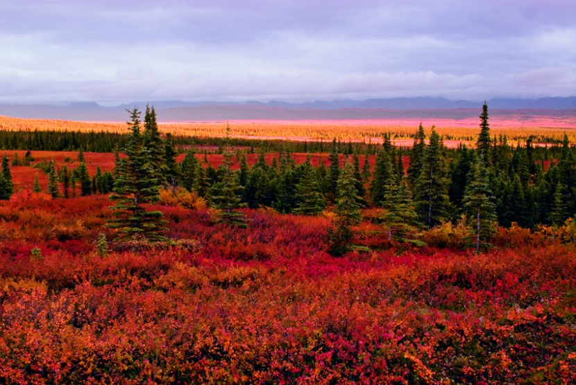 Catch Fall Fever with Alaska's Stunning Foliage