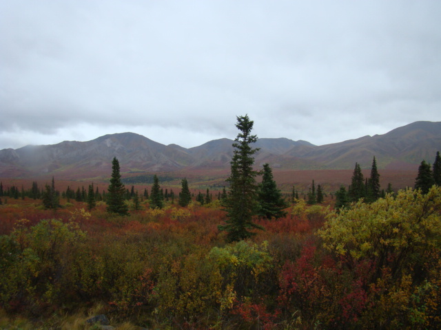 A Fall landscape outside of Fairbanks