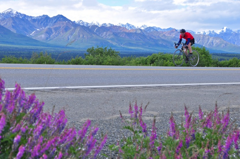 A cyclist rides on the road past fireweed