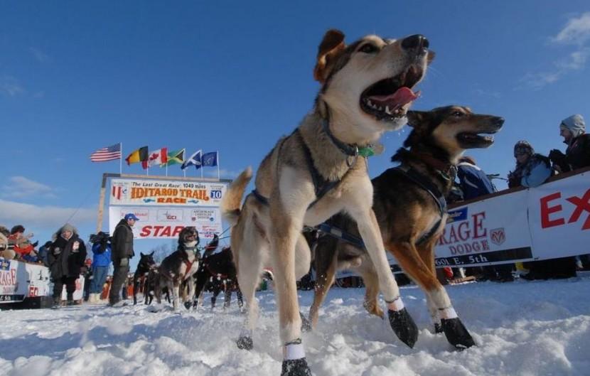 Best Spots to Watch the Iditarod Trail Sled Dog Race