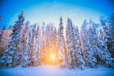 Snow-covered trees outside of Fairbanks, Alaska